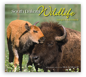 South Dakota Wildlife Impressions by Dick Kettlewell from Clark Flower and Gift Shop in Clark, SD