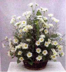 White Daisy Basket from Clark Flower and Gift Shop in Clark, SD